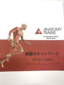 アナトミートレイン-筋膜のネットワーク